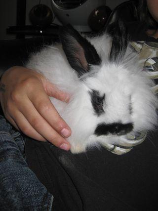 Baby Bunny 010