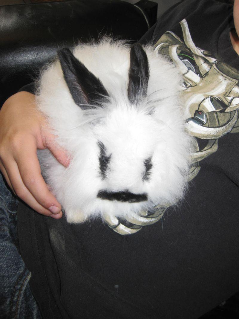 Baby Bunny 007