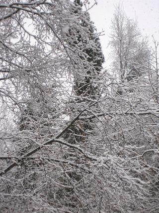 Snow, po boxes 016