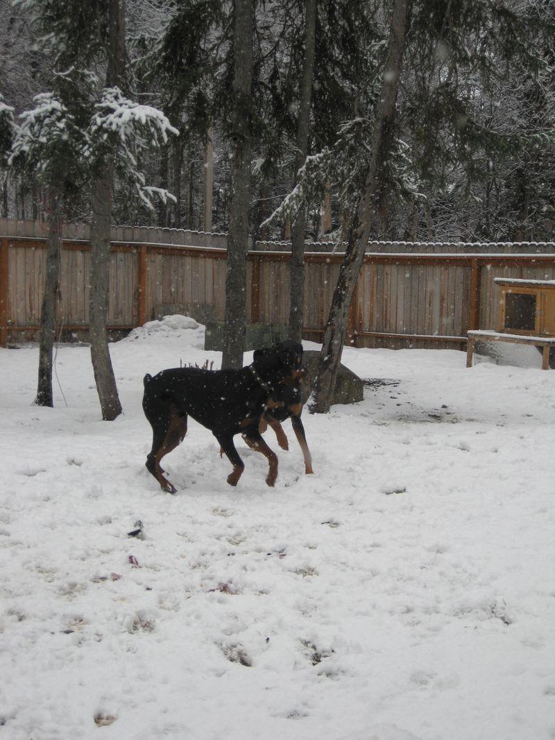 Snow, po boxes 026