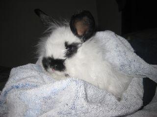 Baby Bunny 014